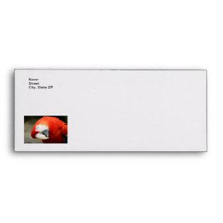 Scarlet Macaw Envelope
