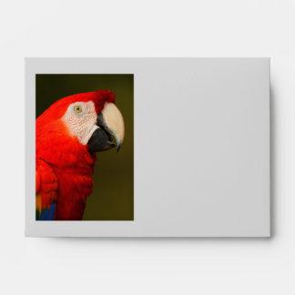 scarlet macaw envelopes