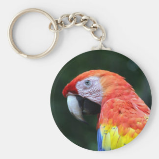 scarlet macaw face basic round button keychain