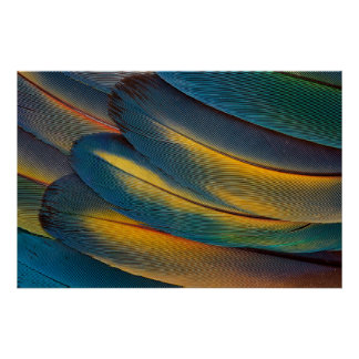 Scarlet Macaw feather close up Poster