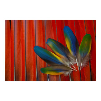 Scarlet Macaw Feather Design Poster