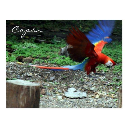 scarlet macaw fly postcard