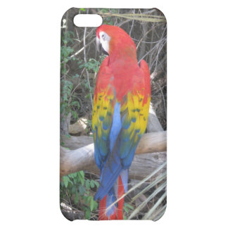 Scarlet Macaw - From the Back Case For iPhone 5C