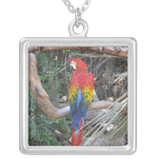 Scarlet Macaw - From the Back Square Pendant Necklace