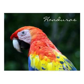scarlet macaw honduras postcard