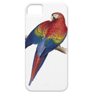 Scarlet Macaw Illustration Case For iPhone 5/5S