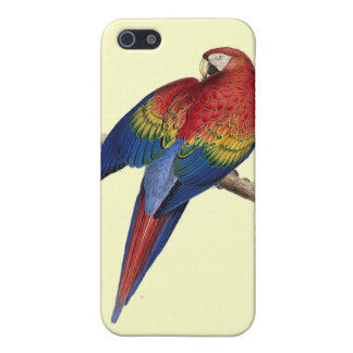 Scarlet Macaw Illustration iPhone 5 Case
