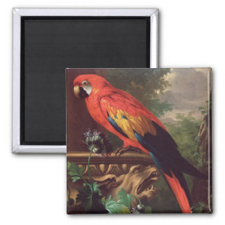 Scarlet Macaw in a Landscape (oil on canvas) Magnet