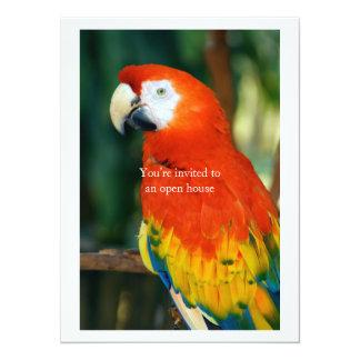Scarlet Macaw Custom Announcements