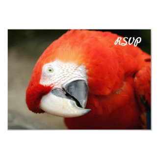 Scarlet Macaw 3.5x5 Paper Invitation Card
