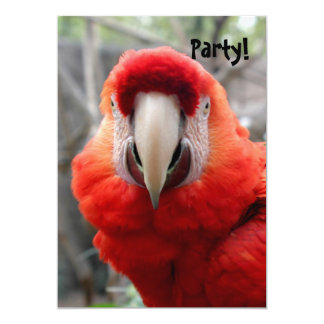 Scarlet Macaw 5x7 Paper Invitation Card