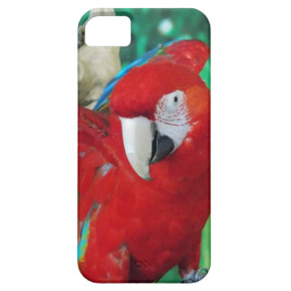 Scarlet Macaw iPhone 5 Case