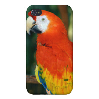 Scarlet Macaw iPhone 4 Cases