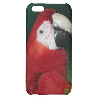 Scarlet Macaw iPhone 5C Cover