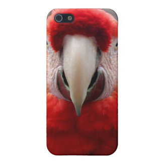 Scarlet Macaw iPhone 5 Covers