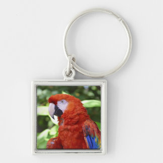 Scarlet Macaw Silver-Colored Square Keychain