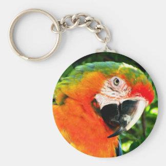 Scarlet Macaw Keychain