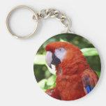 scarlet macaw keychains