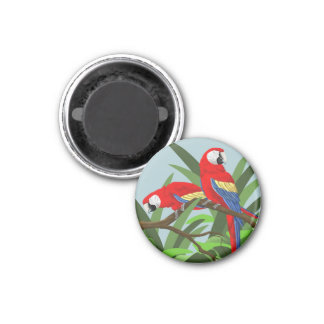 Scarlet Macaw Magnets