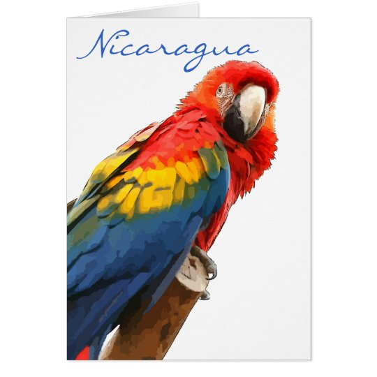Scarlet Macaw Nicaragua Note Card