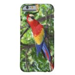Scarlet macaw on tree limb barely there iPhone 6 case