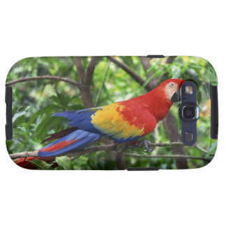 Scarlet macaw on tree limb galaxy SIII covers
