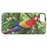 Scarlet macaw on tree limb iPhone 5 cover
