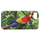 Scarlet macaw on tree limb iPhone SE/5/5s case