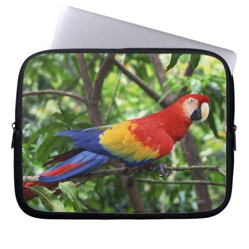 Scarlet macaw on tree limb laptop sleeve