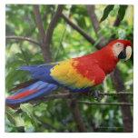 Scarlet macaw on tree limb large square tile