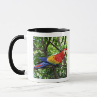 Scarlet macaw on tree limb mug
