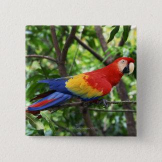 Scarlet macaw on tree limb pinback button