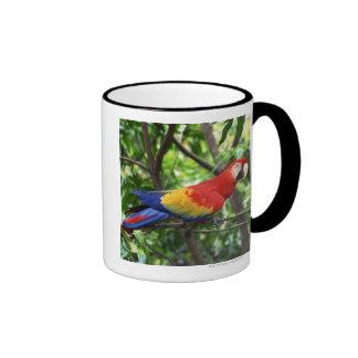 Scarlet macaw on tree limb ringer mug