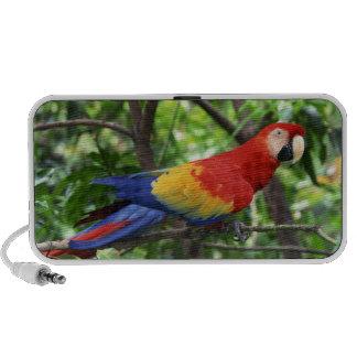 Scarlet macaw on tree limb travelling speakers