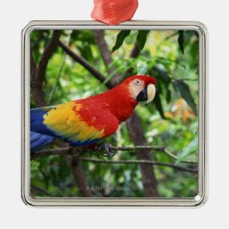 Scarlet macaw on tree limb square metal christmas ornament