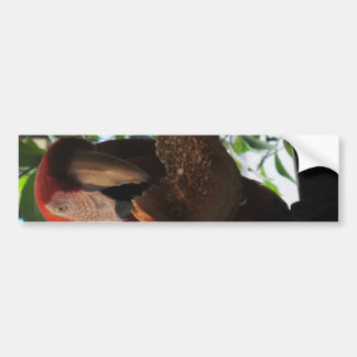 Scarlet Macaw Parrot Eating Toast Bumper Sticker