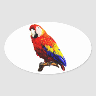 Scarlet Macaw Parrot on A Branch Oval Sticker