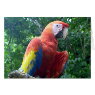 scarlet macaw perch greeting card