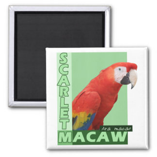 Scarlet Macaw Photo Magnet
