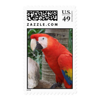 Scarlet Macaw Photography Postage Stamp