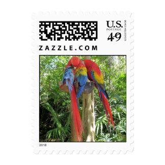Scarlet Macaw Postage