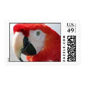 Scarlet Macaw Postage Stamp