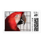 Scarlet Macaw Postage Stamps