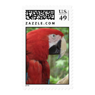Scarlet Macaw Postage Stamps Postage Stamps