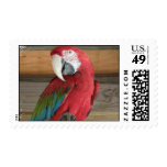 Scarlet Macaw Postal Stamp