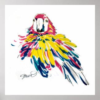 Scarlet Macaw Print