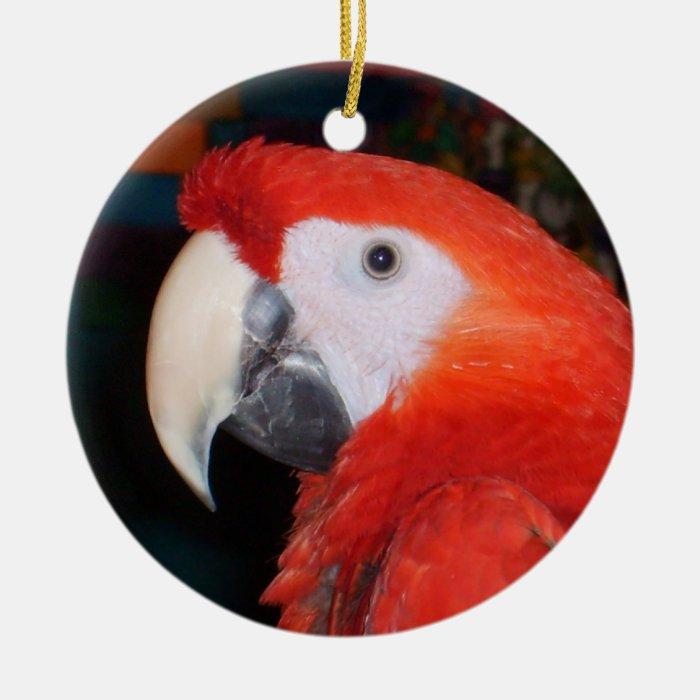 Scarlet Macaw Profile View Ceramic Ornament