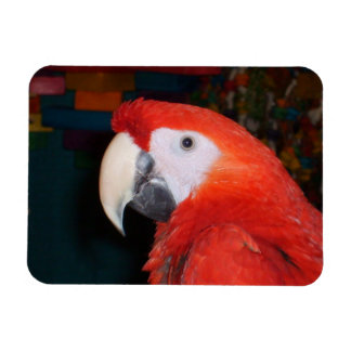 Scarlet Macaw Profile View Magnet