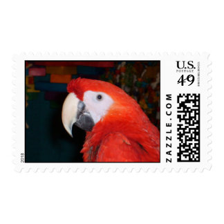Scarlet Macaw Profile View Postage Stamps