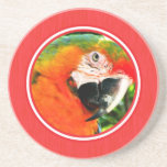 Scarlet Macaw Red Coaster